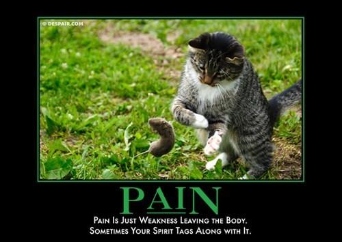 pain mice Cats funny - 8464216832
