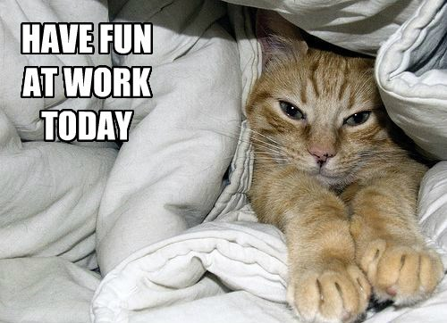 cozy work sucks Cats rude - 8464364288