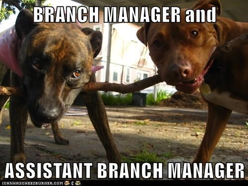 animals dogs manager branch caption - 8464409088