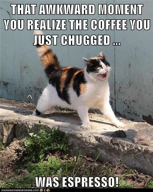 animals cat chug espresso caption - 8464429568
