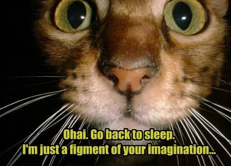 ohai sleep imagination noms Cats