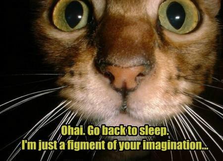 ohai sleep imagination noms Cats - 8464487680