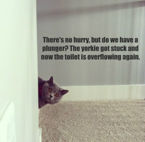 There's no hurry, but do we have a plunger? The yorkie got stuck and now the toilet is overflowing again.