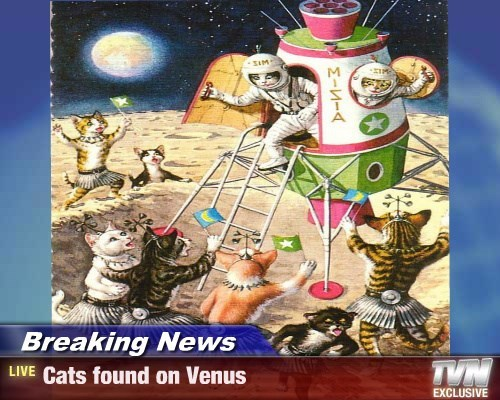 Breaking News - Cats found on Venus