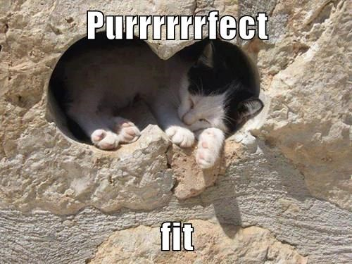 animals cat fit perfect caption puns - 8465220864