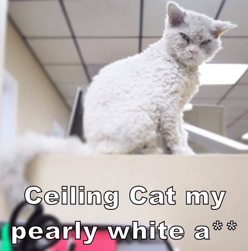 Ceiling Cat my   pearly white a**
