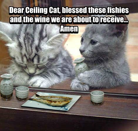 Dear Ceiling Cat, blessed these fishies and the wine we are about to receive... Amen Dear Ceiling Cat, blessed these fishies and the wine we are about to receive... Amen