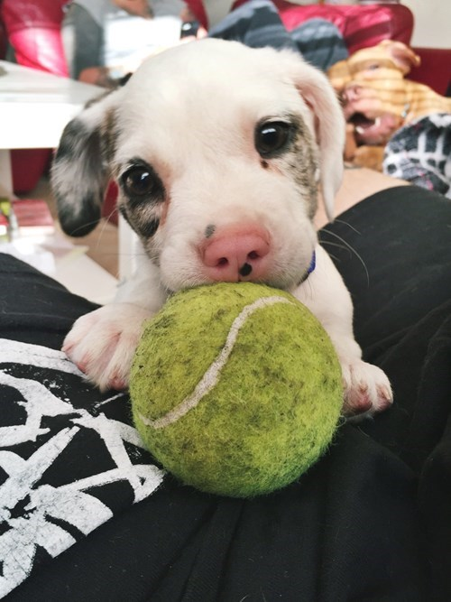 cute baby animals puppy wants to play