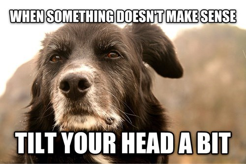 funny-dank-memes-advice-for-dogs