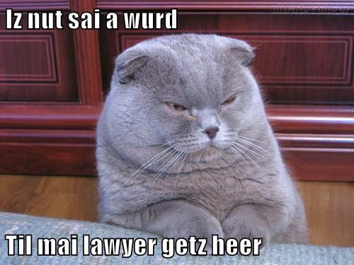 animals cat lawyer caption - 8465894400