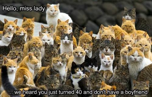 boyfriend caption no Cats - 8466065920
