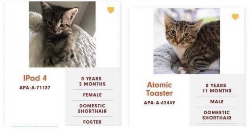 funny cat names at austin animal shelter