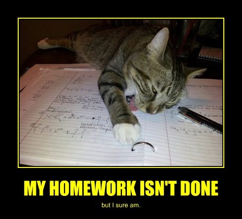 homework cat done caption - 8466396672