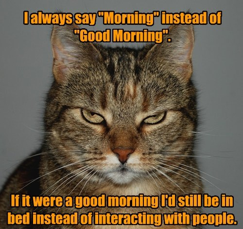 cat good morning caption - 8466398464