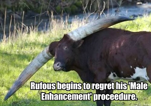 enhancement,cow,drugs,horns