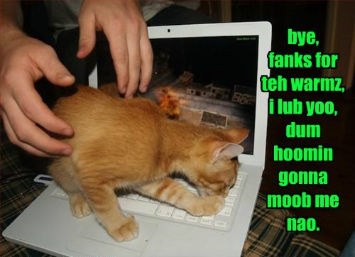 tabby goodbye computer Cats warm - 8466639360