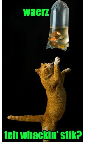 pinata tabby fish Cats