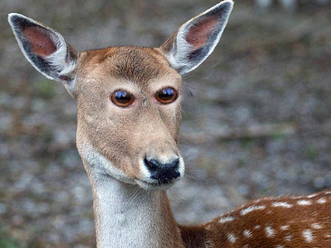 animal photoshop with eyes in the front of their faces