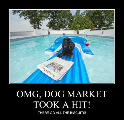 OMG, DOG MARKET TOOK A HIT!