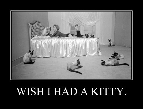 WISH I HAD A KITTY.