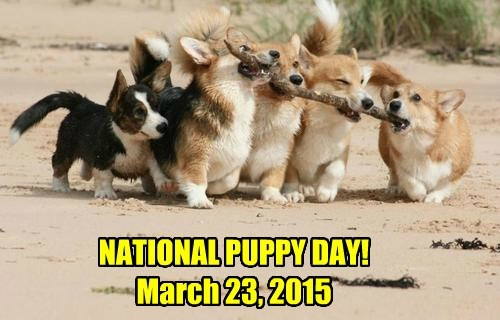 NATIONAL PUPPY DAY! March 23, 2015