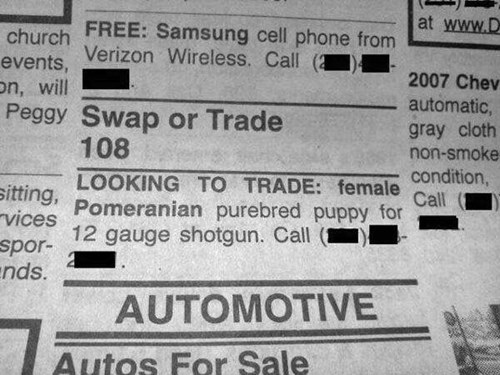 funny-newspaper-pic-trade-dog-shotgun
