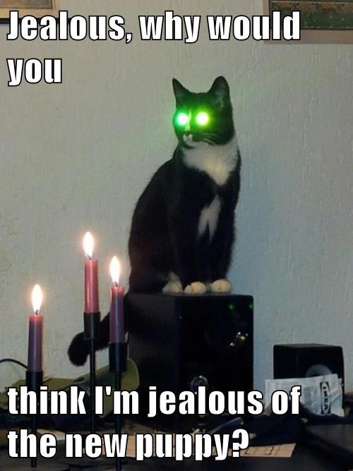 jealous,puppy,laser eyes,Cats