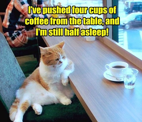 I've pushed four cups of coffee from the table, and I'm still half asleep!