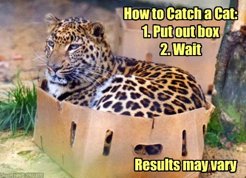 How to Catch a Cat: 1. Put out box 2. Wait Results may vary Chech1965 240315