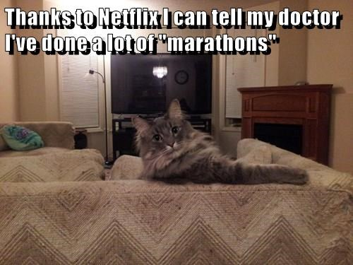 animals true story marathon netflix Cats - 8467440384