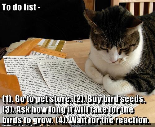 cat,list,caption,pet store