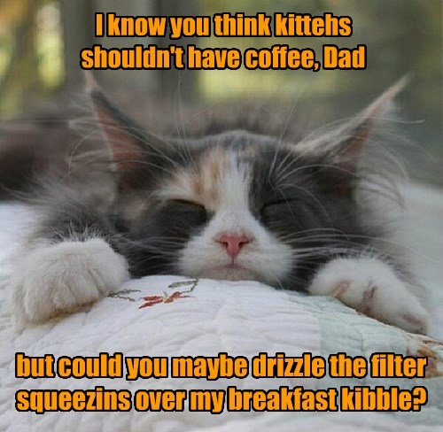 I know you think kittehs shouldn't have coffee, Dad but could you maybe drizzle the filter squeezins over my breakfast kibble?