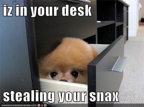 animals pomeranian snack puppy squee thief - 8467926784
