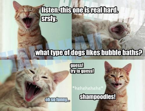 shampoodles!