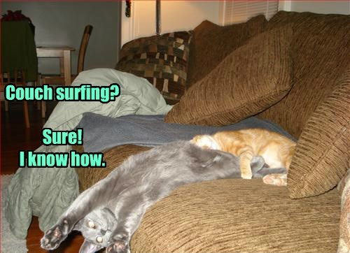 lazy couch surf Cats - 8468091904