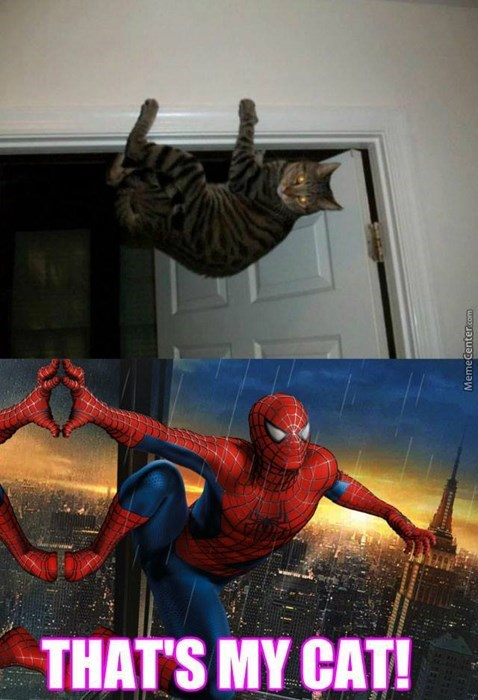 superheroes-spider-man-marvel-acrobatic-cat