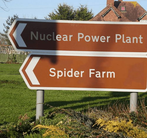 funny-win-pic-sign-spider