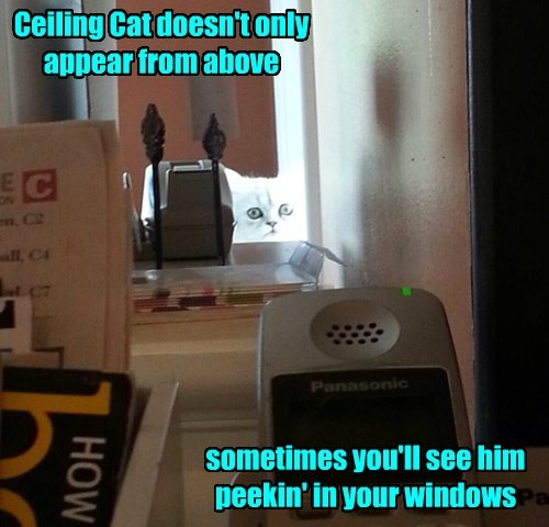 eyes ceiling cat Cats - 8468221952