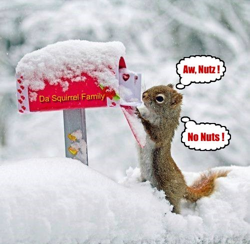 squirrel,nuts,noms,dang,mail