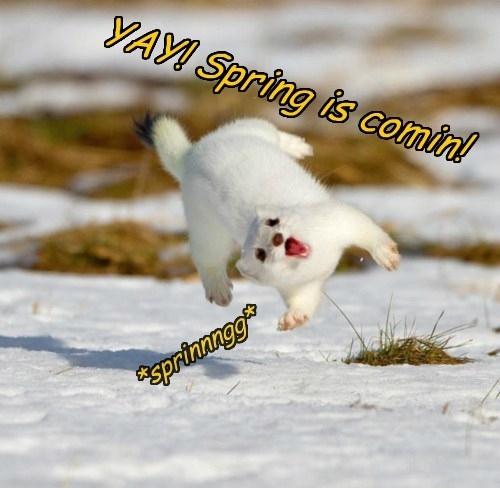 ferret celebrate spring Cats - 8468460800