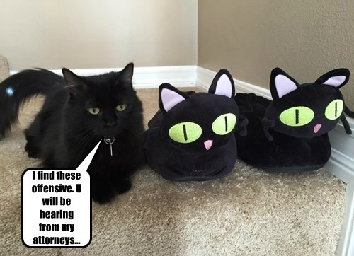 lawyer slippers Cats offensive black cat