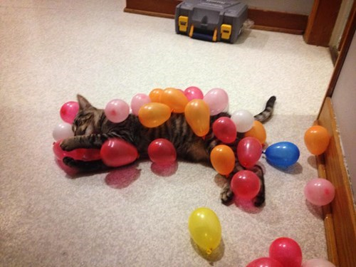 birthday cat with colorful balloons sticking to its fur