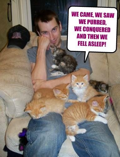 Cats sleeping funny - 8468709632
