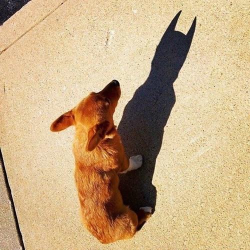 superheroes-batman-dc-dog-shadow