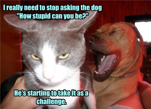 dogs stupid cat challenge caption - 8469287168