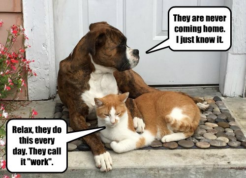 dogs captions Cats funny - 8469450240
