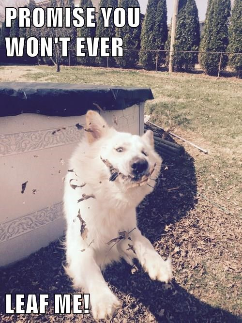 animals dogs captions puns funny - 8469456896