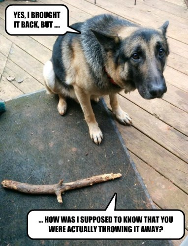 dogs captions funny - 8469740544