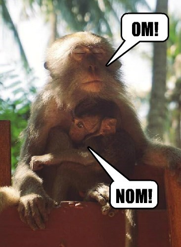 baby animals,monkey,noms,meditate