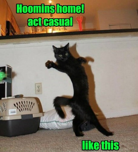 whoops innocent Cats - 8470177792